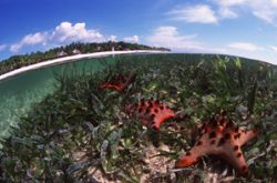 Tristar / Bohol Island, Philippines.  Nikon F100 and 16mm... by Nonoy Tan