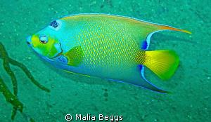 Colorful Caribbean Fish.  Canon G10 by Malia Beggs