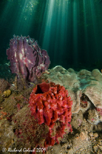 Raja Ampat-Barrel Sponges-Canon 5D MK II 16-35 mm by Richard Goluch