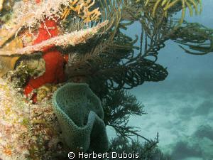 Reef Closeup shot with single strobe by Herbert Dubois