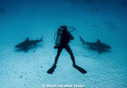 Bull sharks in Mexico, which way to go? by Jason Decaires Taylor