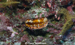 Orange Clam by Tony Anderson