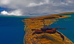 Found this lonely Crab driffting on a big piece of driftw... by Tunc Yavuzdogan