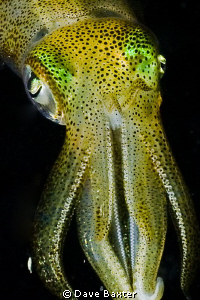 night dive at Robb's jetty by Dave Baxter