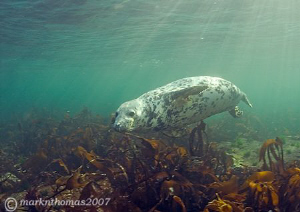Grey seal pup. Farne Islands. D200 10.5mm. Last one of... by Mark Thomas
