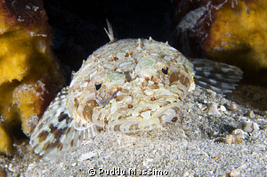crcodile fish nikpn d2x 60mm micro by Puddu Massimo