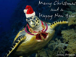 Merry Christmas to everyone at underwaterphotography.com... by James Dawson
