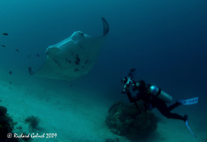 """Spread Out Your Wings""-Manta Point-Raja Ampat by Richard Goluch"