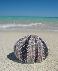 """""""Sea Gift"""" from Ningaloo Reef by Penny Murphy"""