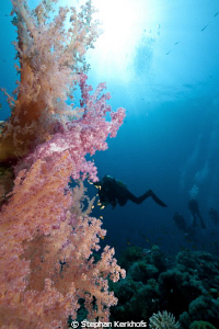 Awsome softcoral taken at Gordon Reef Tiran. by Stephan Kerkhofs