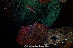 Medas by Umberto Pompilio