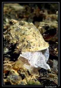 face 2 face w/ a beautiful sweet water snail ... by Daniel Strub