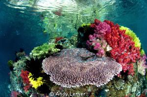 Beautiful shallow reefs near FakFak Indonesia by Andy Lerner