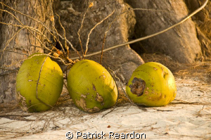 Coconuts on the beach at sunset.  Rum Point, Grand Cayman. by Patrick Reardon