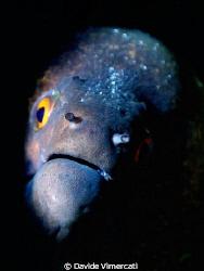 yellow-eyed devil - mooray eel taken @ baa atholl, maldiv... by Davide Vimercati