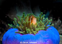 Anchored on the sea bed whilst Mantas were swimming throu... by Dave Johnson