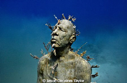 Underwater sculpture planted with live fire coral by Jason Decaires Taylor