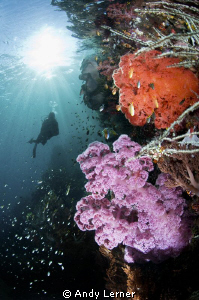 Among the soft corals of Triton Bay by Andy Lerner