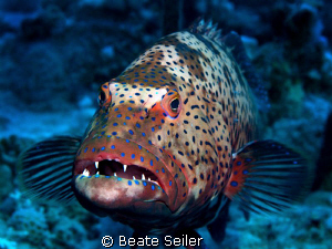 Grouper taken with Canon G10 by Beate Seiler