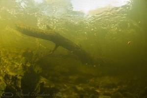 Log in the river. River lune. D3, 16mm. by Derek Haslam