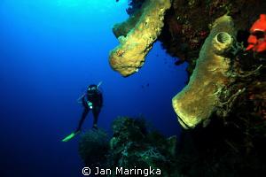 underwater scenery gorontalo by Jan Maringka