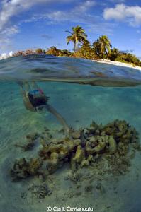 Exploring a small reef on the coast of a beautiful Island... by Cenk Ceylanoglu
