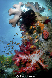 Lots of life in the sunny reefs by Andy Lerner