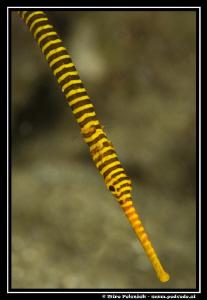 stripes by Miro Polensek