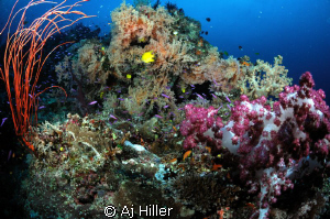 Healthy coral reef, shot with Nikon D2X, 10.5mm fisheye, ... by Aj Hiller