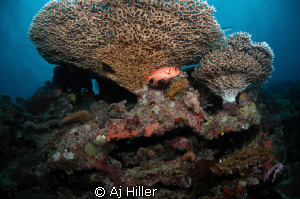 Soldierfish under reef canopy; shot with Nikon D2X 10.5mm... by Aj Hiller