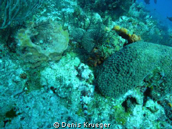 Scorpion fish drift diving in Cozumel.  Floated right ove... by Denis Krueger