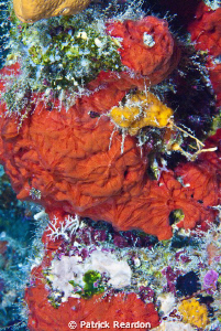 A particularly colorful patch of vibrant reef in Grand Ca... by Patrick Reardon