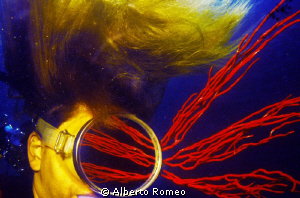 Gorgonian's reflection.  NO P.S. by Alberto Romeo