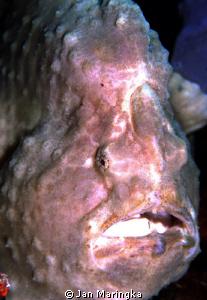 angler fish by Jan Maringka