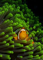 'Clown Neon'