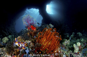 """""""Windows"""" A beautiful shallow swim-through under a small ... by Andy Lerner"""