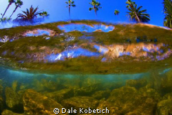 "This is a Breaking wave  allthough I titled this "" Palm T... by Dale Kobetich"