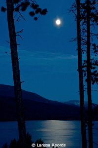 Moonlit night. by Larissa Roorda