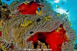 The big family by Cipriano (ripli) Gonzalez