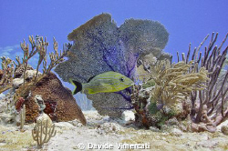 Just like in an aquarium. Taken @ Jardines, Playacar, Mex... by Davide Vimercati
