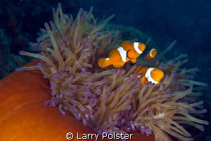 Family affair by Larry Polster