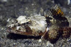Taken on night dive at Lembeh Straits. by John Miller