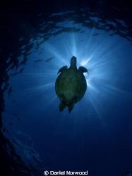 Turtle Silhouette in Sipadan. by Daniel Norwood