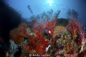 Watching over the reefs by Andy Lerner