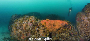 a stitched panorama (5 pics taken vertically) of a reef (... by Geoff Spiby