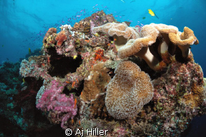 Beautiful and very healthy coral reef in the South Pacifi... by Aj Hiller