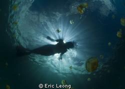 Mermaid by Eric Leong