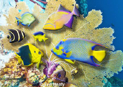 3D composite of fish from various locations in the Caribb... by Lyn Hardy