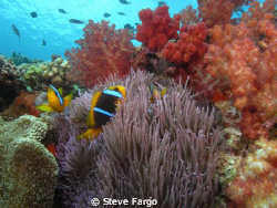 Top of the reef at Beqa Lagoon. by Steve Fargo