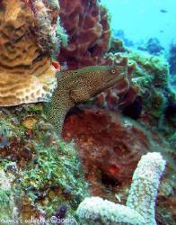 Small eel at Palancar Gardens, Cozumel, Mexico by Marc Volkman